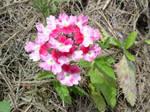 A living bouquet