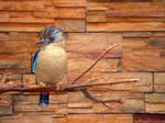 paradise bird by IgnGiannioglou17
