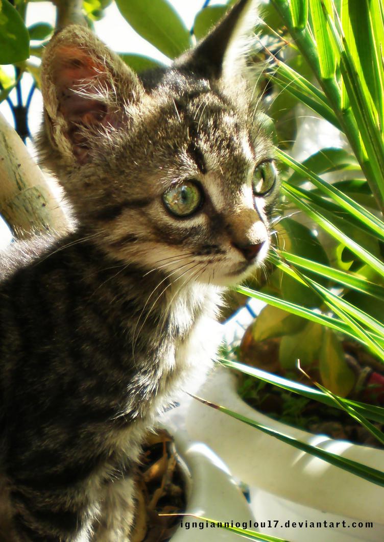 Green-eyes kitty I by IgnGiannioglou17