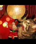 Christmas cat!!