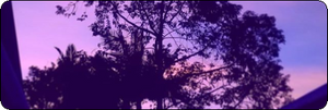 Generic Sunset Divider #5