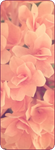 |F2U| Pink flowers divider by RariDecor