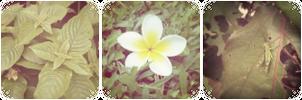 {F2U} Green garden aesthetic divider by RariDecor