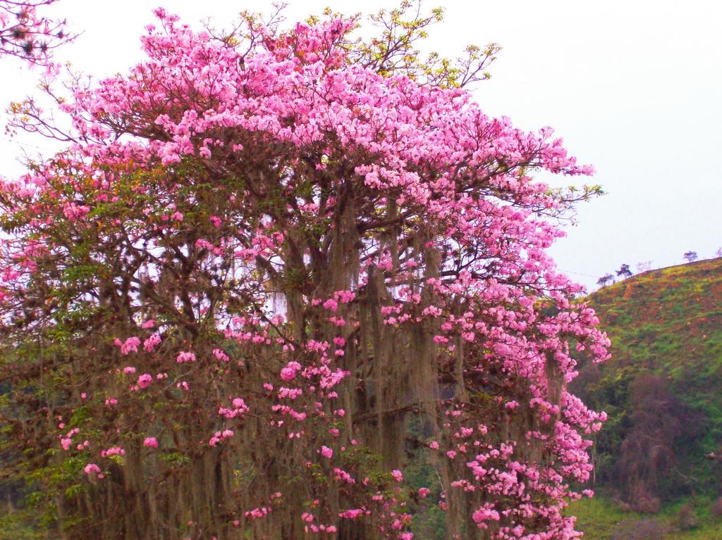 Arbol de flores rosa by thredith on deviantart - Arbol de rosas ...