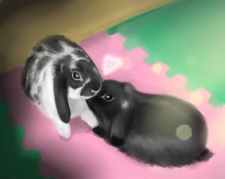 bunny`s love