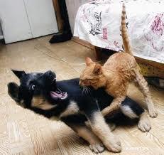 cats vs dog