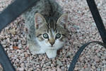 Curious kitten looking at the camera