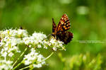 Butterfly by andreiciungan
