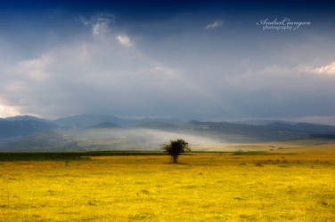 Lonely by andreiciungan
