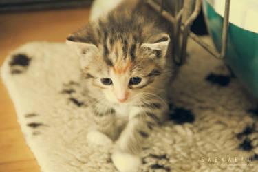 Kitten - 1