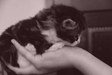 Kitten - 2