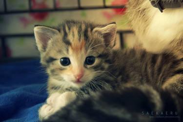Kitten - 3