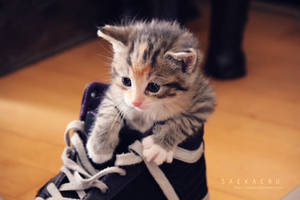 Kitten - 4 by Saekaeru