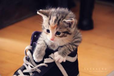 Kitten - 4