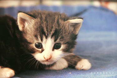 Kitten - 5