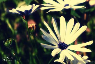 White Flower by sunnydsl