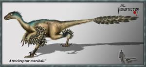 Atrociraptor marshalli by karkemish00