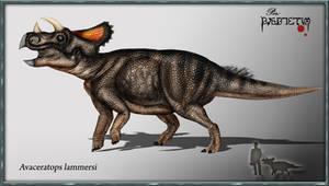 Avaceratops by karkemish00