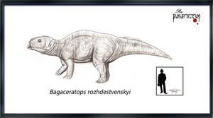 Bagaceratops rozhdestvenskyi