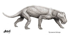 Sycosaurus laticeps