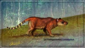 cf. Protogonodon