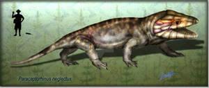 Paracaptorhinus neglectus
