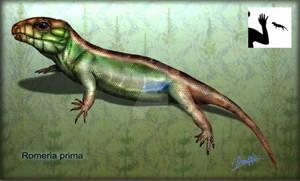 Romeria primus