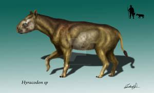 Hyracodon sp