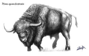 Bison aguascalientensis