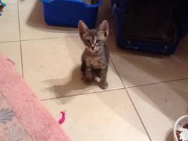 My New Kitten by GeekyEffy