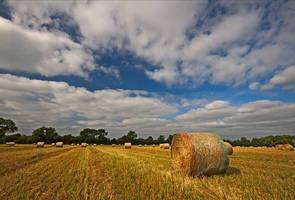 Field by KervanoK