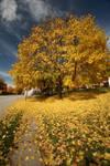 Late Fall Leaves - II