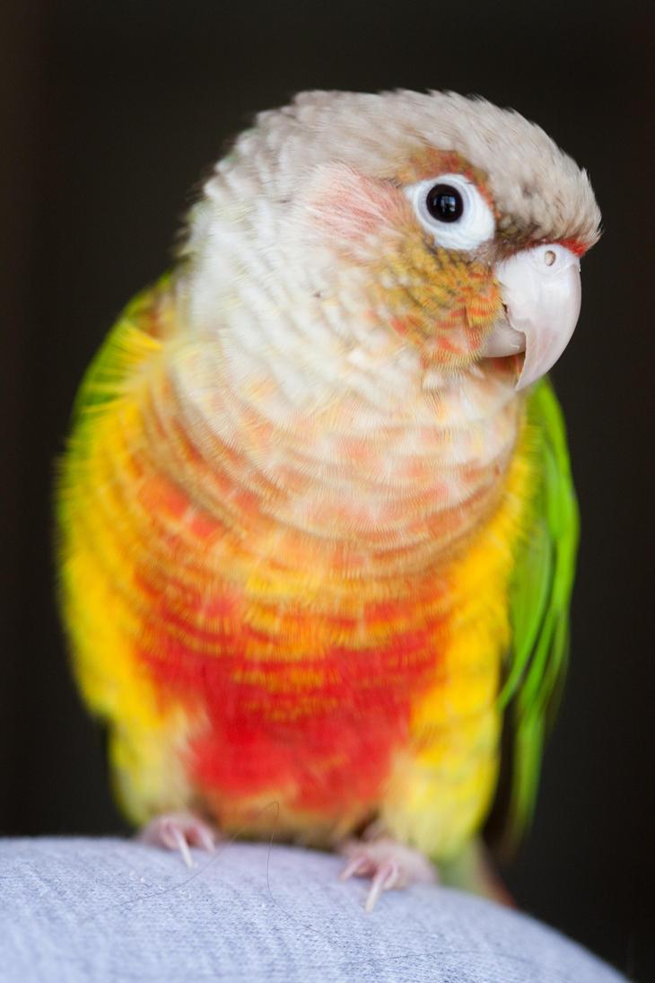 Fiery Rainbow Bird by froggynaan