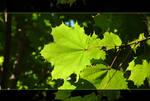 Green Glowing Leaf