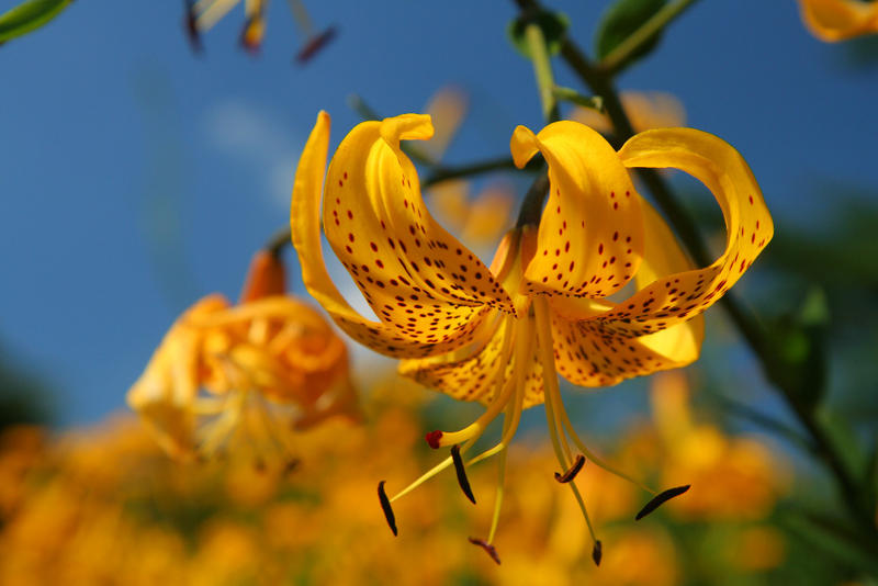Yellow on Yellow by froggynaan