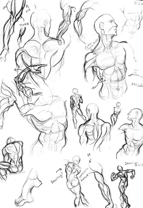 Male Anatomy Practice By Muirin007 On Deviantart