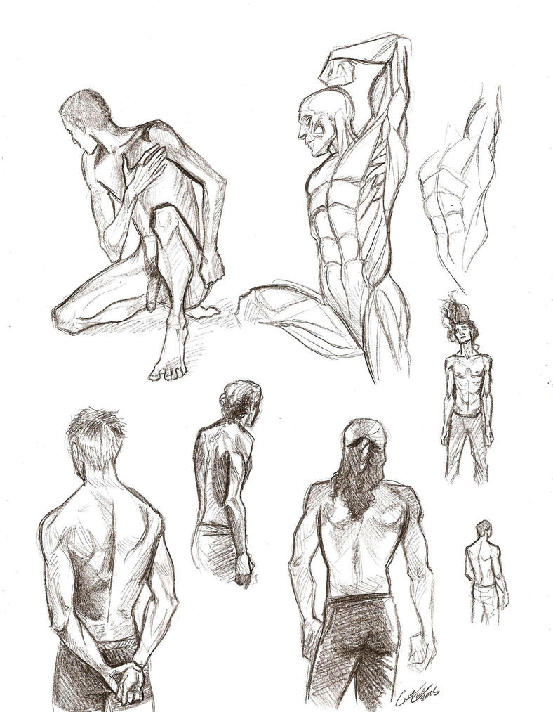 Male anatomy sketches by Muirin007