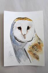 Owl by mrch2mybeat