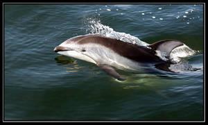 Wild Dolphin by vantid