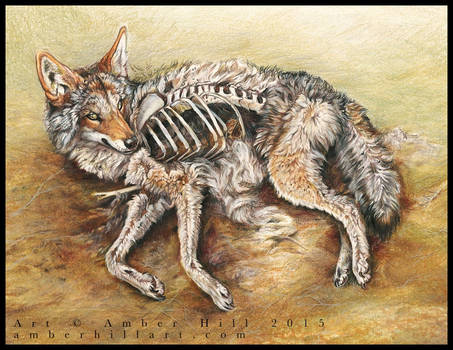 Coyote Resurrection