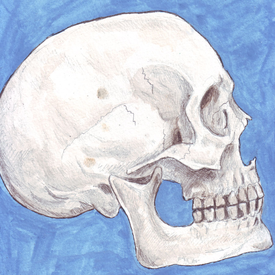 Skull 5 by amybalot