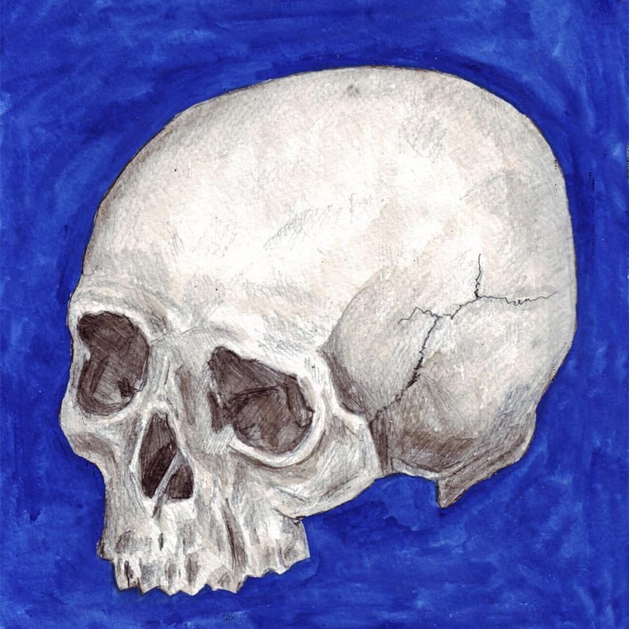 Skull 8 by amybalot