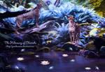 The Hideaway of Cheetahs