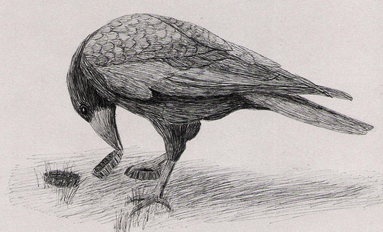 Random Bird 4 by 130Dk