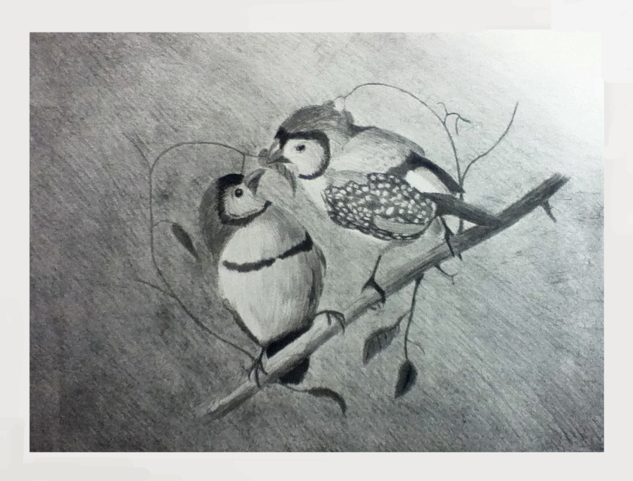 Double Barred FInches by 130Dk