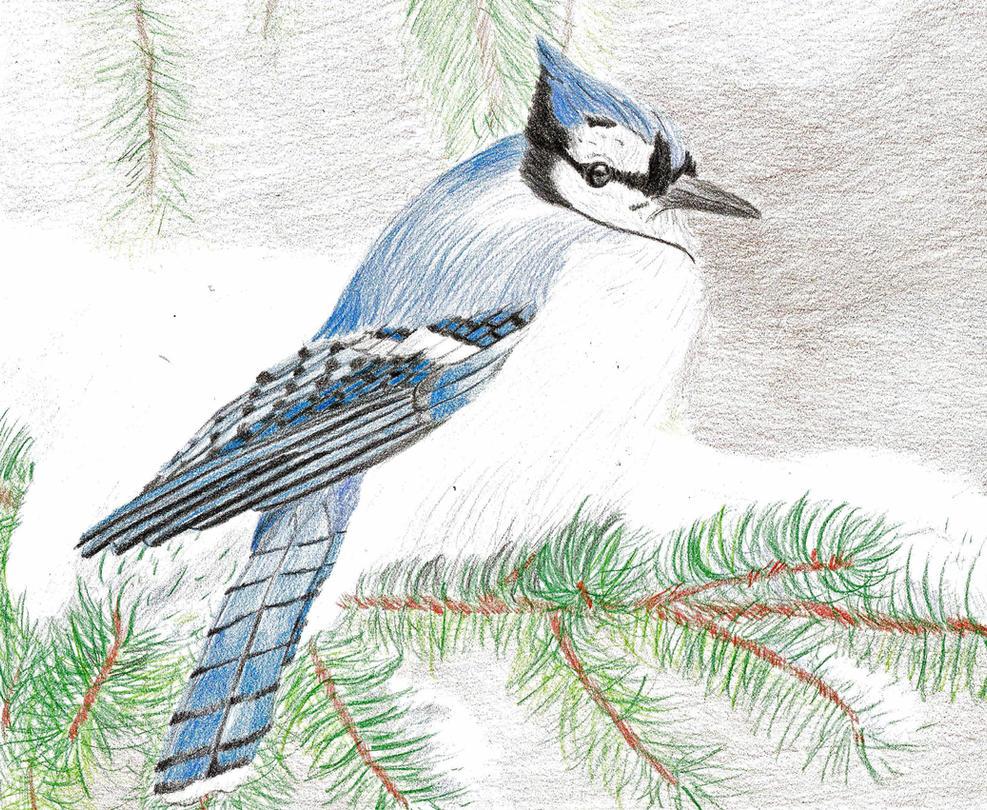 Blue Jay by 130Dk