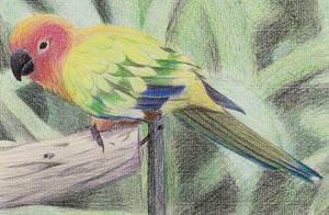 Sun-Parakeet by 130Dk