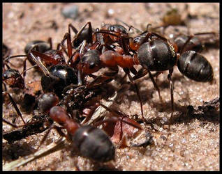Ants by DogMeat