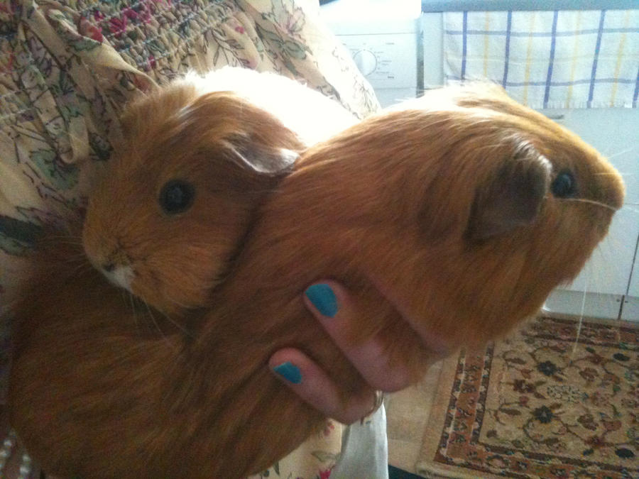 My Cute Piggies by samanthanagel1567
