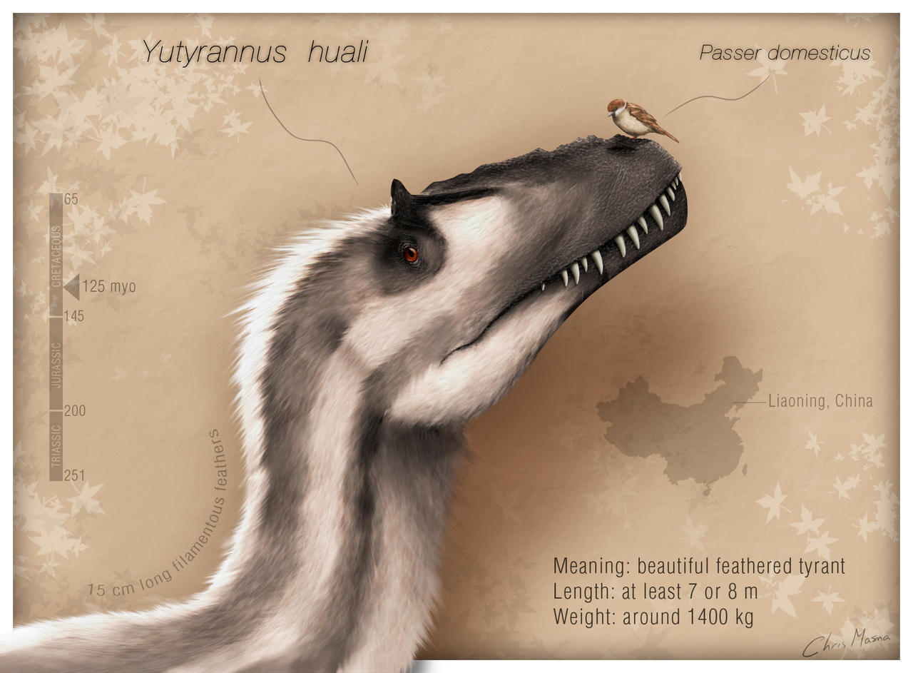 Ladies and gentlemen: Yutyrannus huali by ChrisMasna